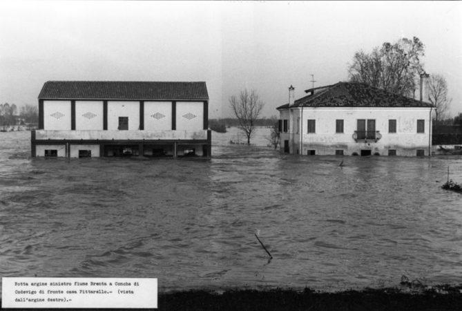Rotta argine sinistro fiume Brenta e Conche di Codevigo di fronte a casa Pittarello, vista dall'argine destro ph@ Comune di Venezia - Archivio della Comunicazione (1966)