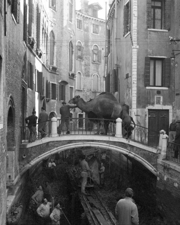 Circo Togni - Venezia 1954 - PH© Vittorio Pavan Archivio Cameraphoto