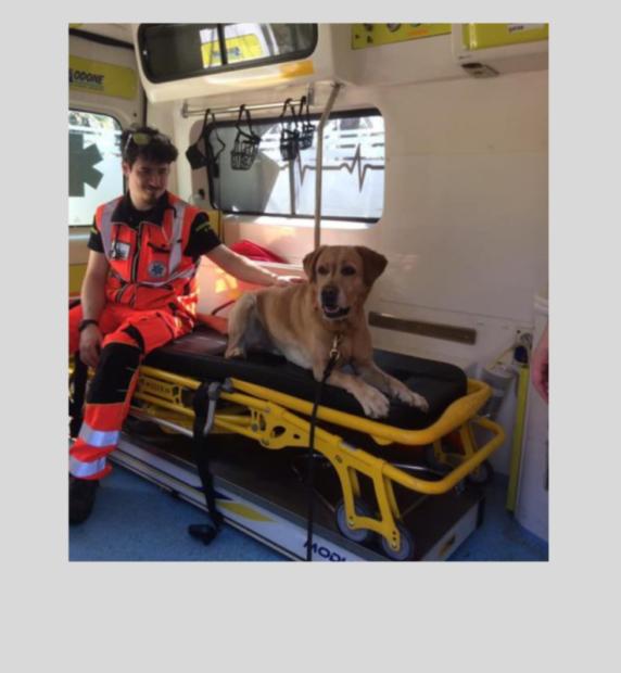 Dalla raccolta facebook all'ambulanza per gli animali