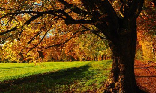 I colori di Mestre. Il verde degli alberi e le nuove cromie