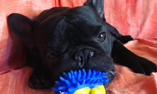 Giornata del cane: col coronavirus, gli abbandoni non sono aumentati
