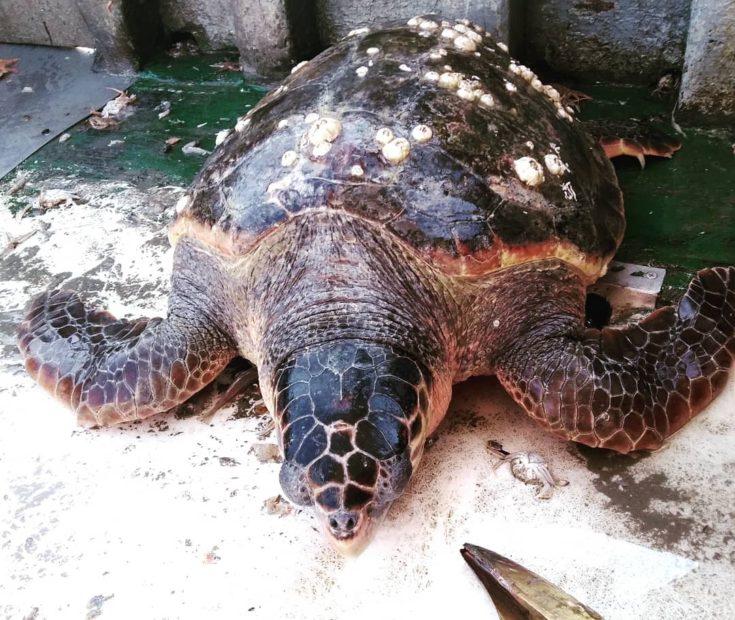 Lido, la spiaggia più bella: anche per tartarughe e delfini