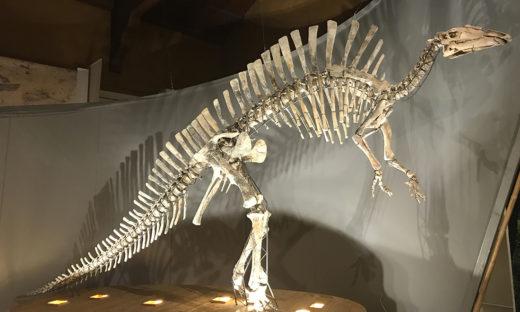 Giancarlo Ligabue: Venezia gli intitola il Museo di Storia Naturale