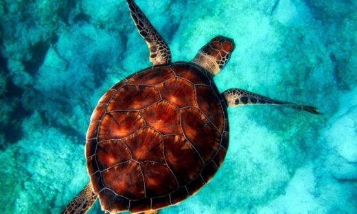 Dagli Oceani alla Laguna: dieci anni per mettere a posto le cose