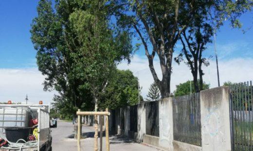 Cresce il patrimonio verde del Comune di Venezia