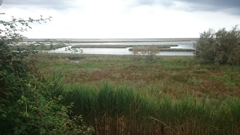 Area di intervento. Vista della Laguna dal Sile