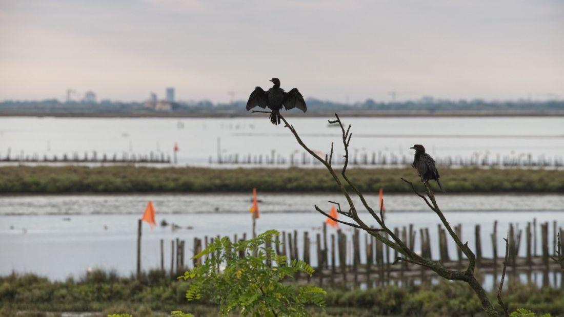 Acqua dolce per richiamare uccelli e pesci nella laguna di Venezia: funziona