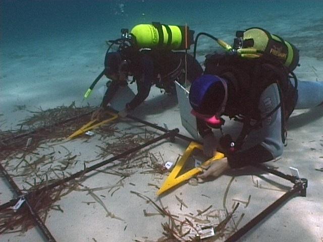 Il Golfo di Venezia: un mondo sommerso ricco di sorprese