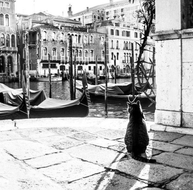 Venezia celata dietro a un gatto