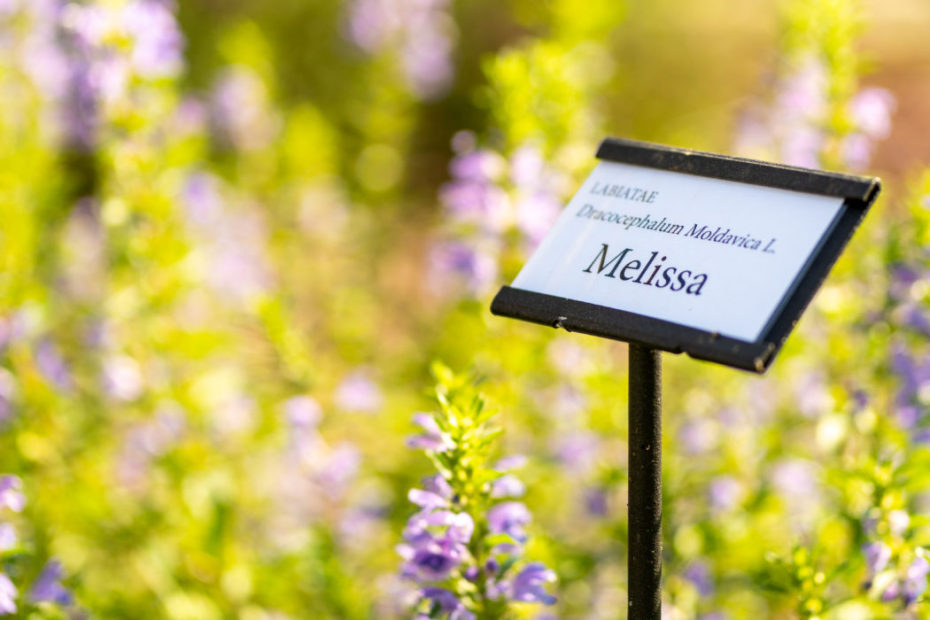 Melissa Moldovica Feel Venice