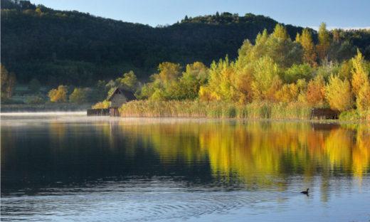 Boschi a Natale: 17 passeggiate tra parchi, oasi e aree naturalistiche