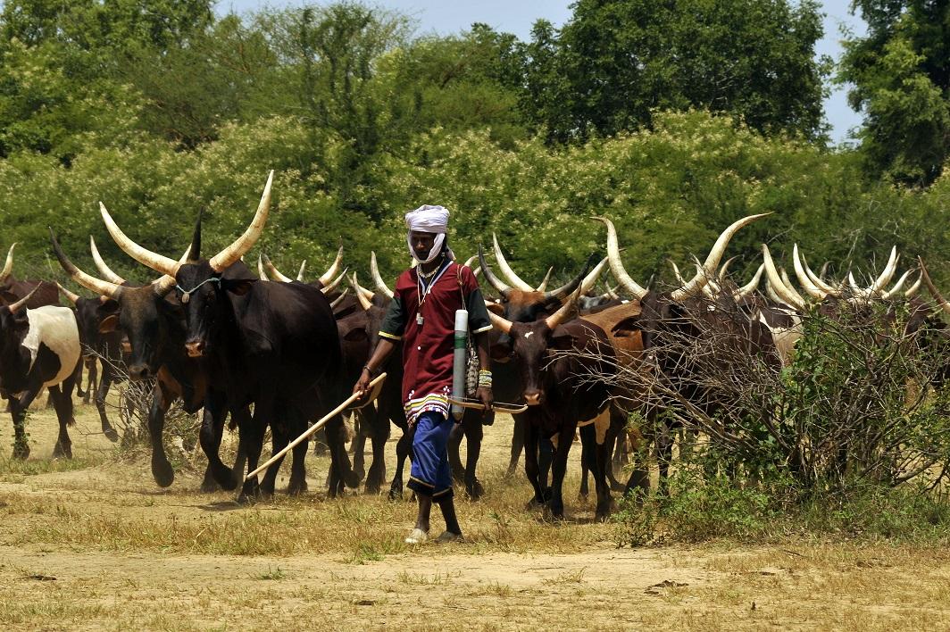 Io cammino con i nomadi viaggio