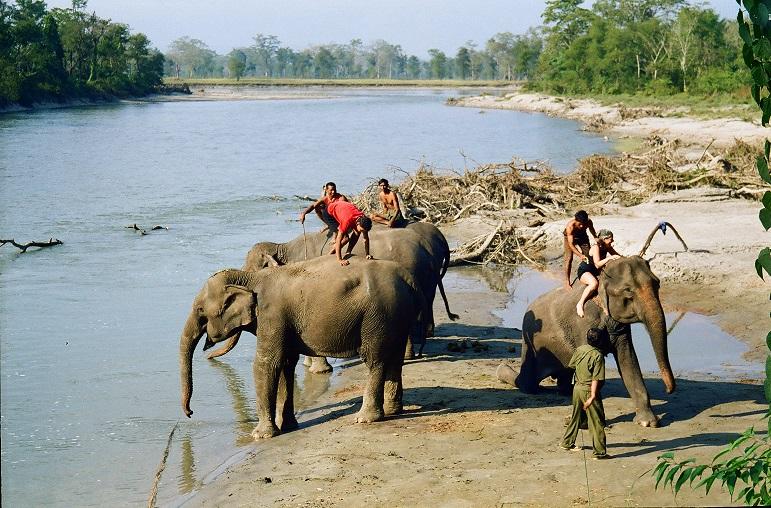 Nepal Bagno con gli elefanti a Citwan