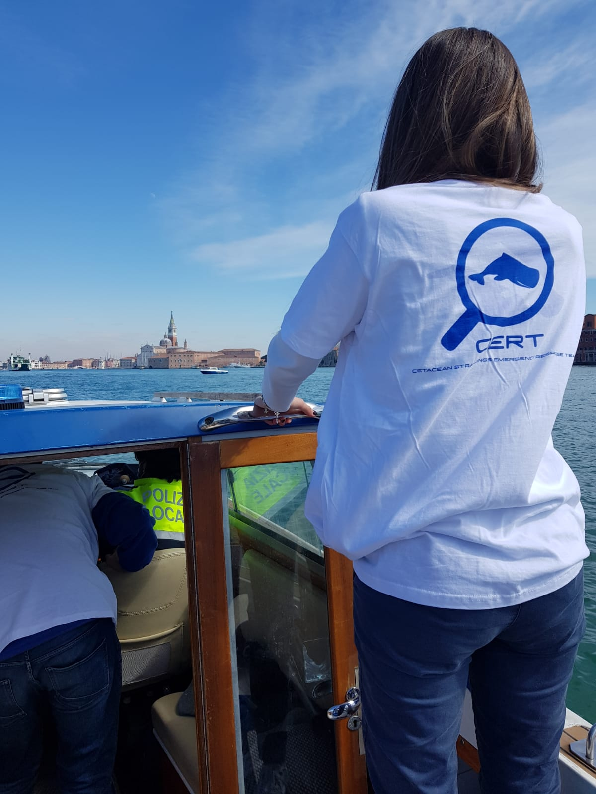 delfini a Venezia
