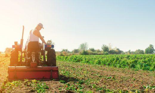 Italia: l'agricoltura sostenibile è in netta crescita.