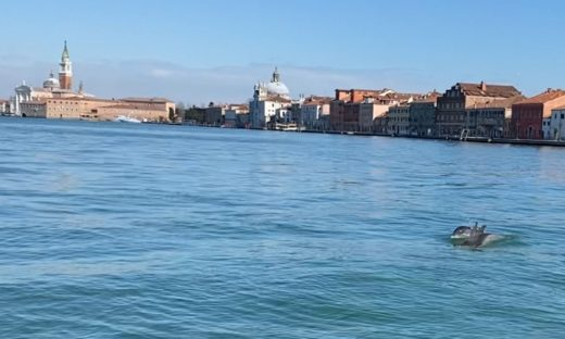 Delfini gourmet a Venezia: tante seppie e orate.