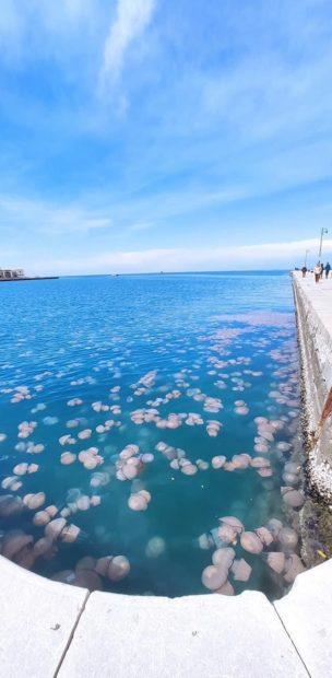 Meduse nel Golfo di Trieste @ Lorenzo Zuffi