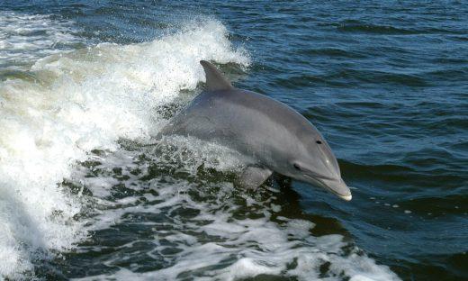 Balene, squali, delfini, tartarughe e razze: crescono gli avvistamenti in Italia