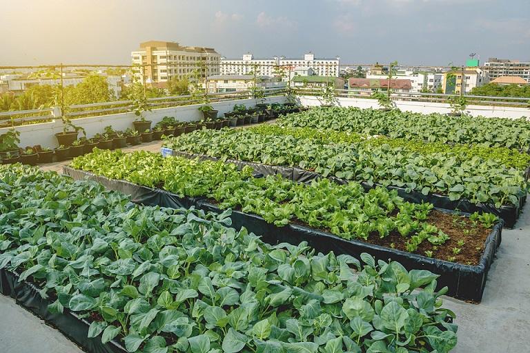 Covid: 4 italiani su 10 coltivano nei propri orti in città