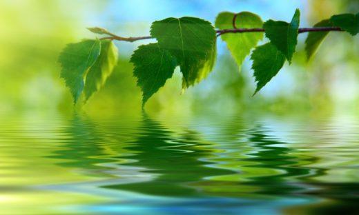 UE: approvato il programma Life, 5 miliardi di euro per ambiente e clima