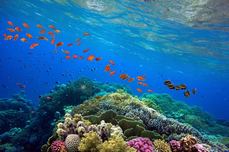Giornata dell'Ambiente 2021: salviamo gli ecosistemi