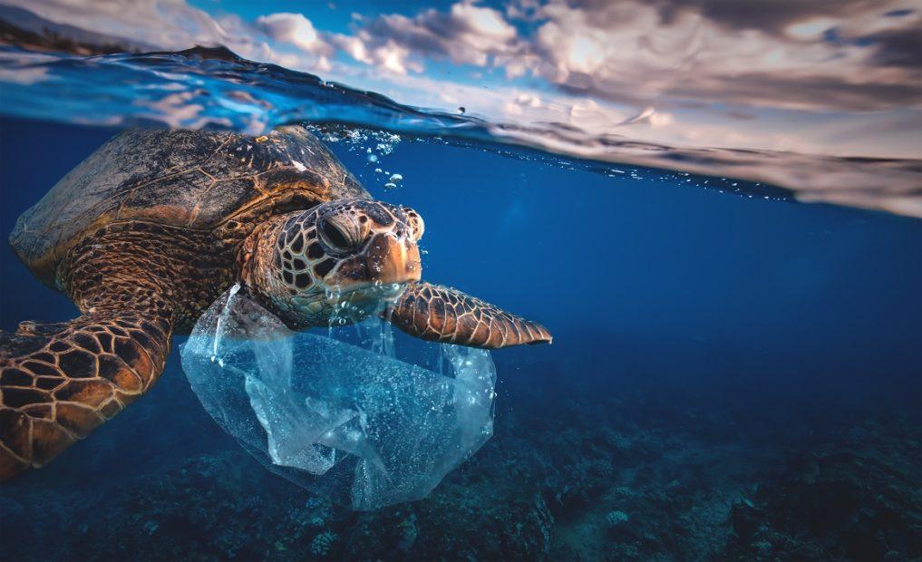 Giornata mondiale degli oceani, il mondo si mobilita per salvare il mare