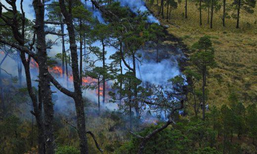 Incendi boschivi: l'UE prepara la flotta per contrastare l'emergenza