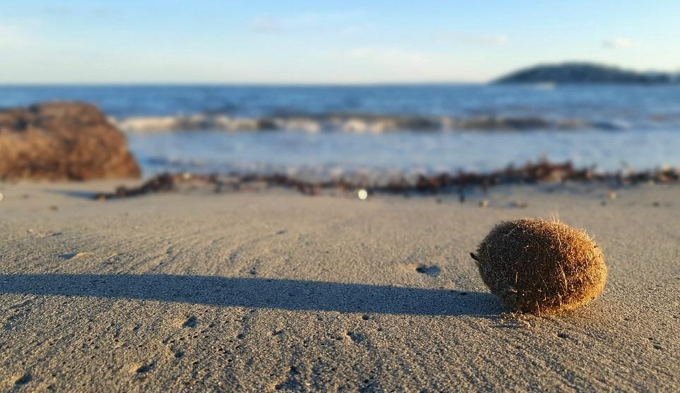 """Salvaguardia del mare: le """"Palle di Nettuno"""" trappole per la plastica"""