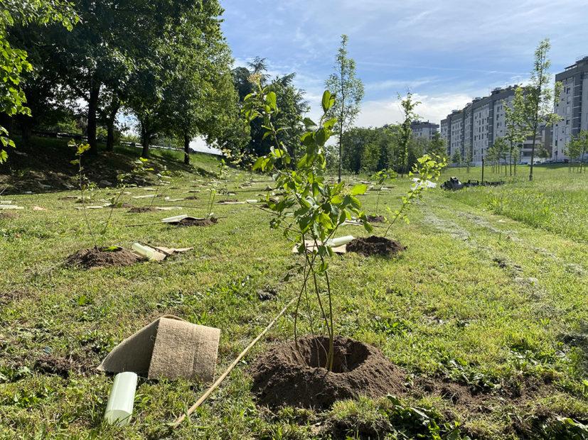 """""""Forestami"""": il progetto green dell'area metropolitana di Milano"""