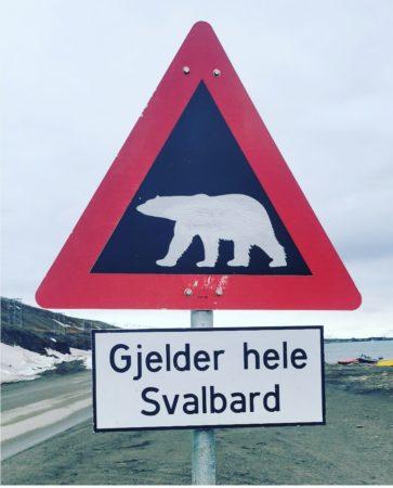 Polar bear attention!