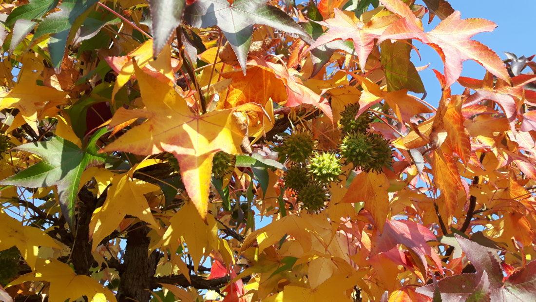 22 settembre 2021: arriva ufficialmente l'autunno. Poi di nuovo il caldo